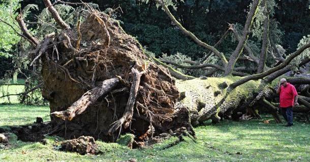 Damage in FLORENCE caused by bad weather the day after hailstrom