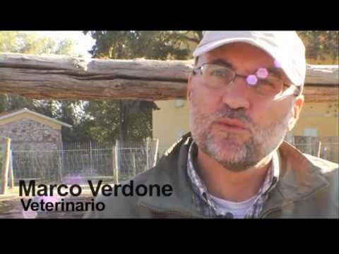 avatar for Marco Verdone