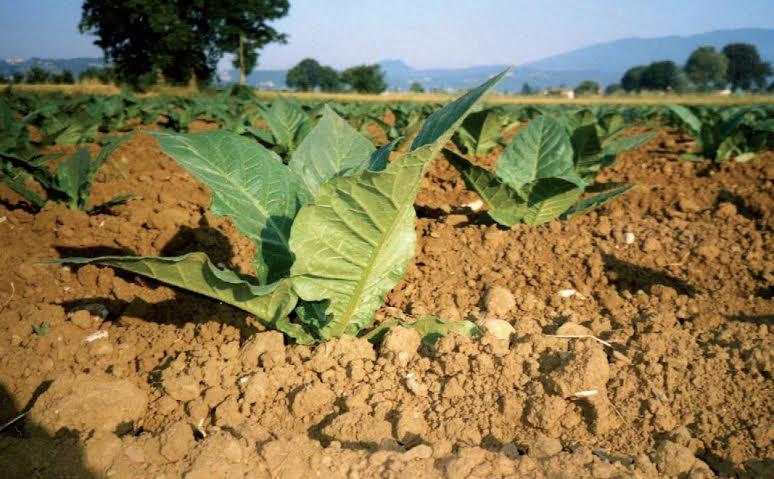 Aboca lascia la Toscana: troppi pesticidi