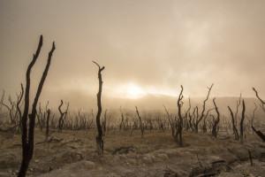 alberi-morti