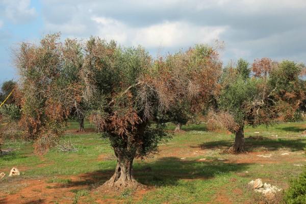 Servizio Fitosanitario della Regione Toscana: ecco come (non) vanno le cose