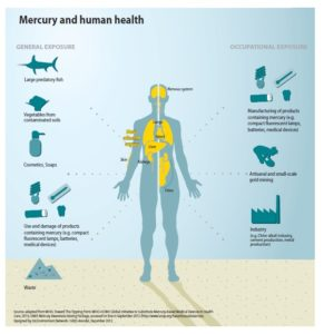 mercury-and-human-health