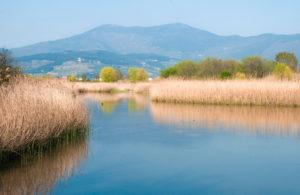 oasi_di_focognano_-_panoramica