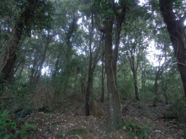 Fabio Clauser e il bosco in Italia: assetto idrogeologico, prosperità, benessere