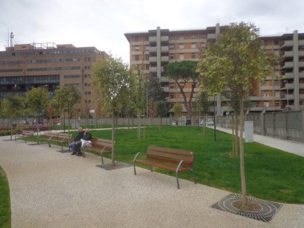 Sulla tutela del Patrimonio Arboreo e Arbustivo di Firenze