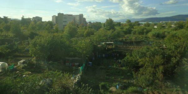 Il posto degli alberi in città: domani