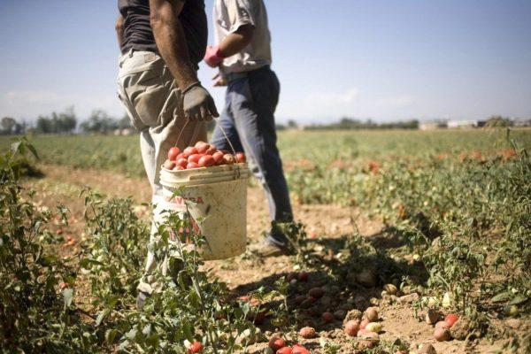Stop allo sfruttamento dei migranti come lavoratori agricoli in Italia