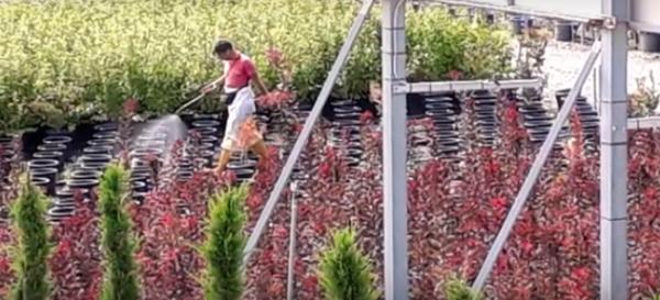 Ribellati ai pesticidi e alla politica avvelenata. Sostieni il ricorso al Tar per fermare la Regione Toscana