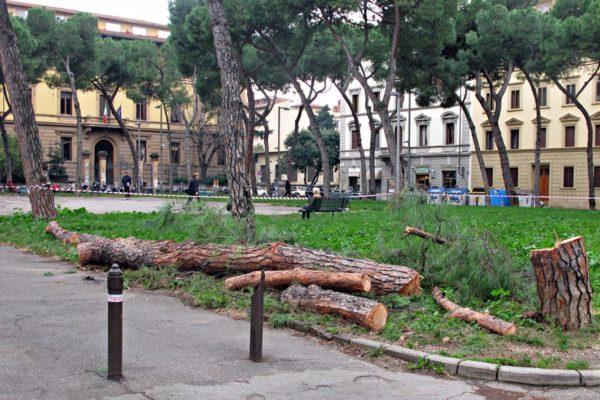 Taglio degli alberi a Firenze: l'appello a Mancuso, consigliere speciale di Nardella