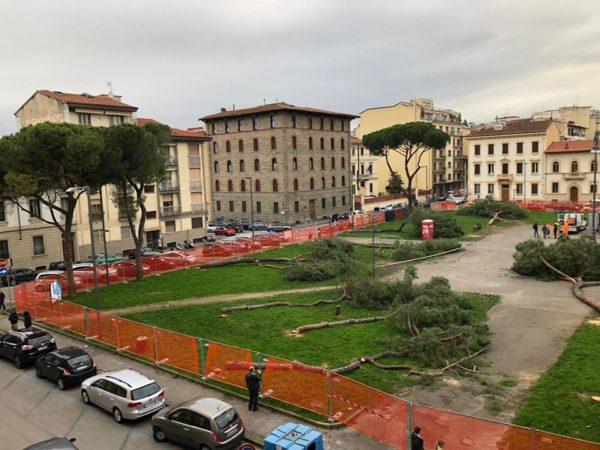 Piazza della Vittoria, per i pini nessuna pietà. Partiti gli esposti alla procura
