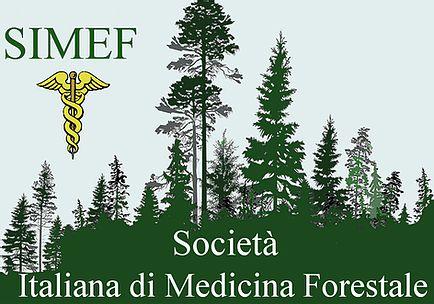 Perche Tutelare I Boschi Lo Spiega La Societa Italiana Di Medicina Forestale Perunaltracitta La Citta Invisibile Firenze